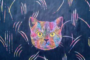 cat dream box
